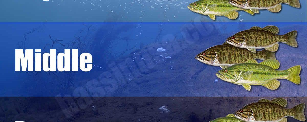 Bass Feeding Zones