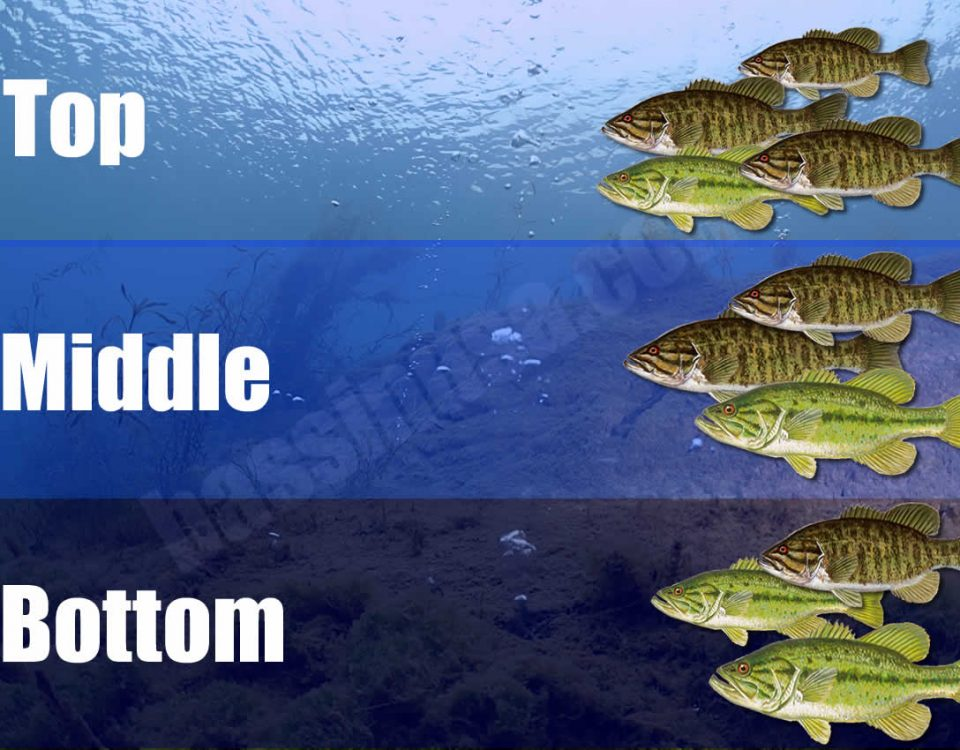 Bass Feeding Zones