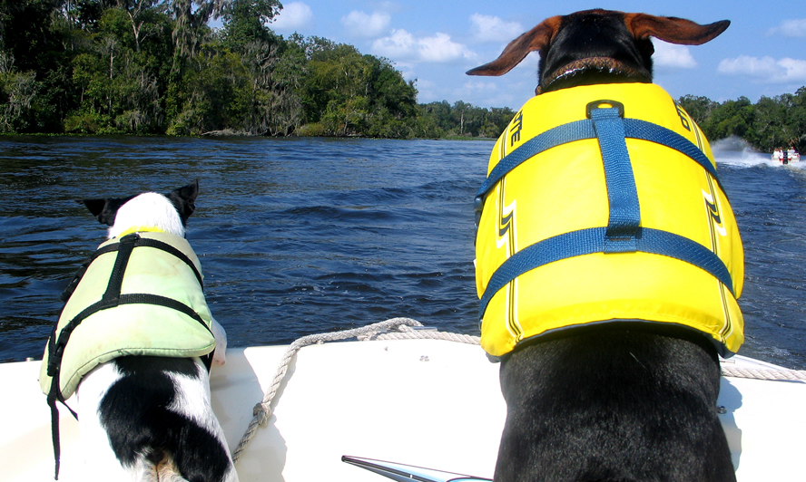 boats pet lifevest